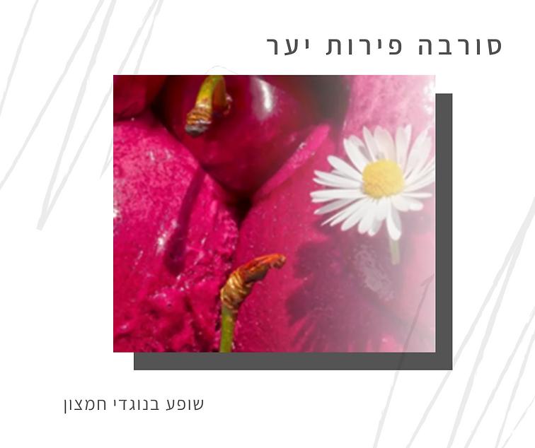 מתכון לסורבה פירות יער-גליה יהודה-הבית לנטורופתיה במודיעין