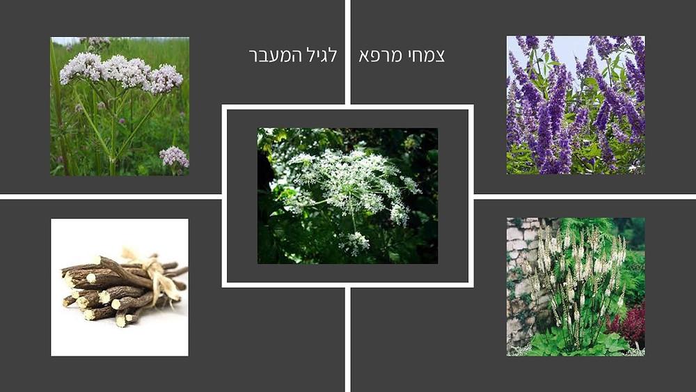 צמחי מרפא לגיל המעבר-גליה יהודה-הבית לנטורופתיה