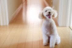 犬フロア.jpg