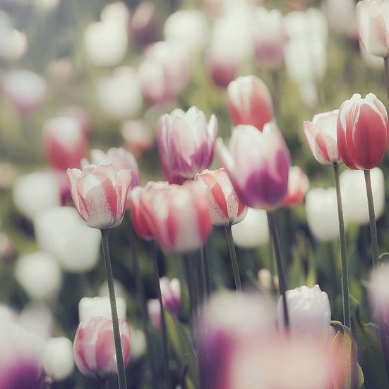 Showerwall Cladding - Floral