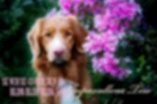 thumbnail_FB_IMG_1562153726325.jpg