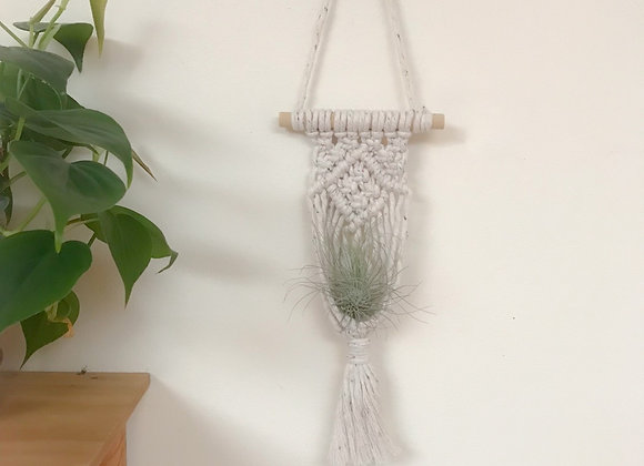 Macrame Air Plant Holder with Air Plant