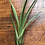 Thumbnail: Macrame Plant hanging with Air plant