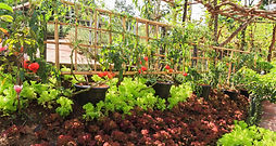 Companion-planting-vegetable-garden.jpeg