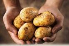 003 - 5 Potatoes, one variety