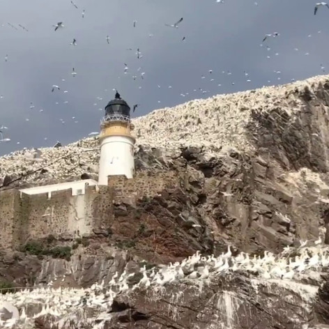 My trip to Bass Rock with Scottish Seabird Centre. Video by Gina Duncan