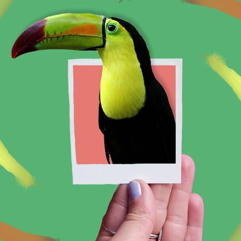 parrot-2.mp4
