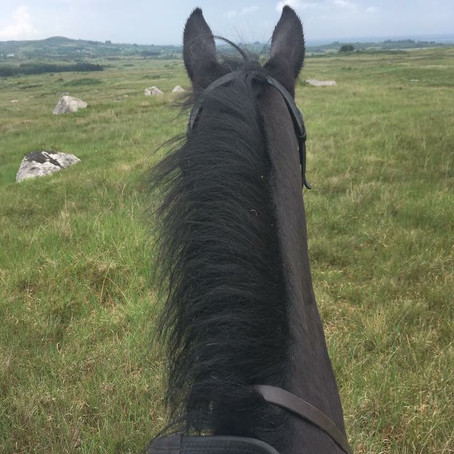Galloping Across the Countryside of Galway