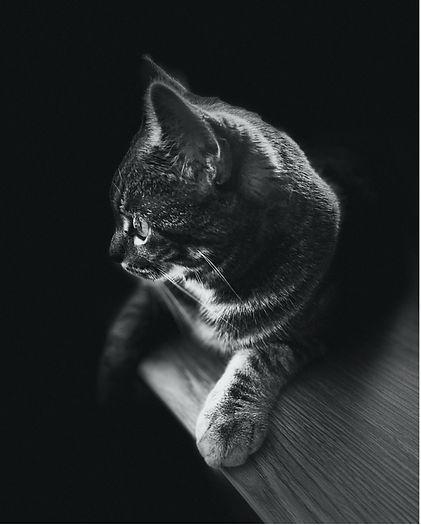 CAT MONTAGE.jpg