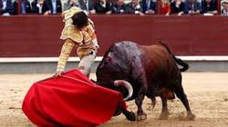 España Toreo