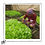 Thumbnail: Cesta Agro ecológica da Volta do Américo