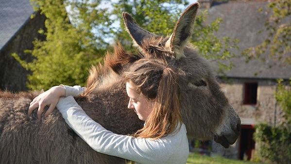 donkey-2714578_960_720.jpg