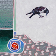 pied crow and perception
