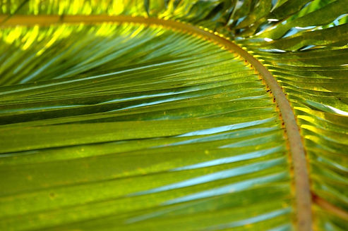 palm-1-1350133_edited.jpg