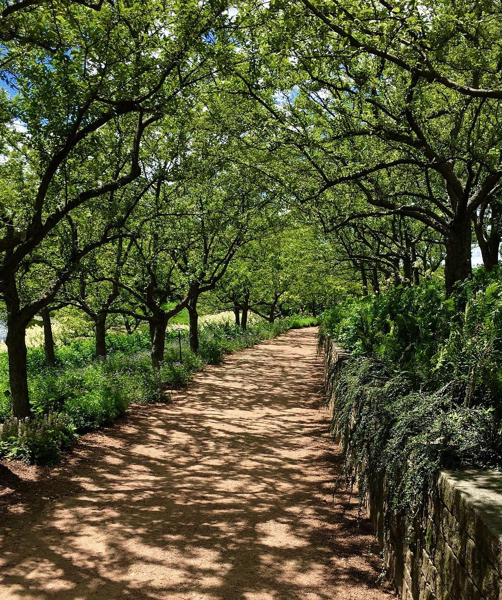 Chicago Botanic Garden path