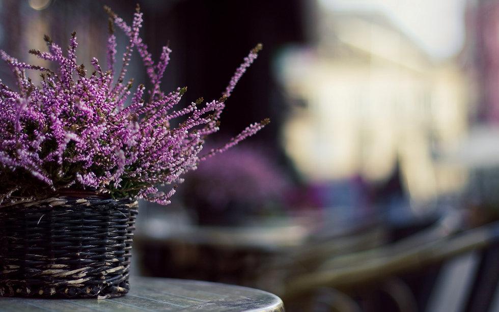 Flowers lavender basket Wallpaper.jpg