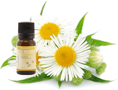 Aromatherapy Chamomile Essential Oil