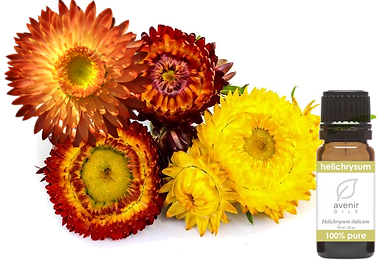 Immortelle Helichrysum Essential Oil