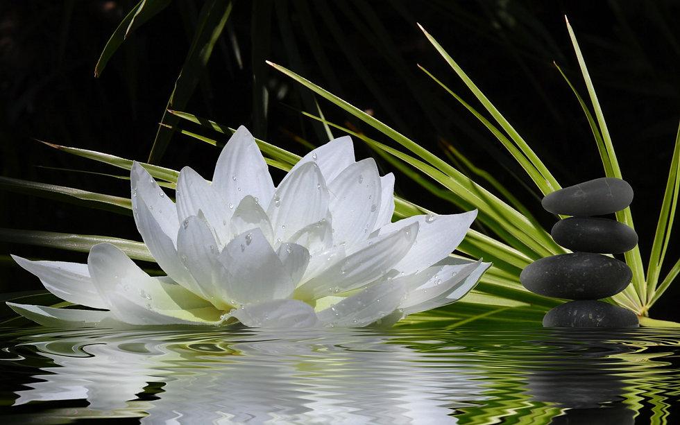 Spa Lotus Meditation Wallpaper 3.jpg