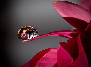 Waterdrop Close Up Photography Wallpaper