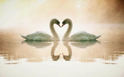 Swans_Divine Partnership Wallpapers.jpg