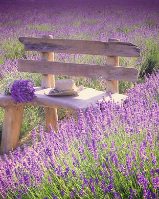 Lavender Banner 054XC01_edited.jpg