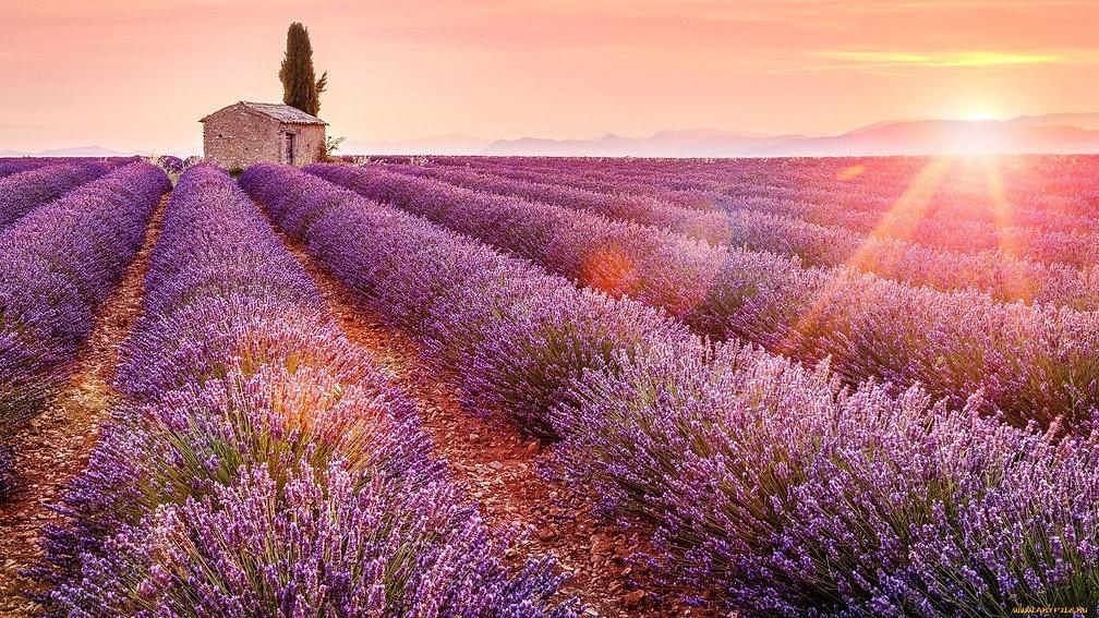 lavender-field-photo1.jpg