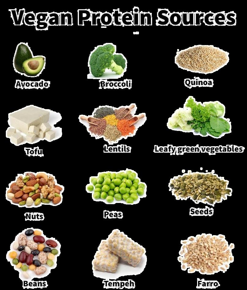 Vegan Protein Sources 1
