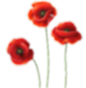 Red Poppies.png