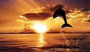 Ocean-Sunset-Wallpaper-.jpg
