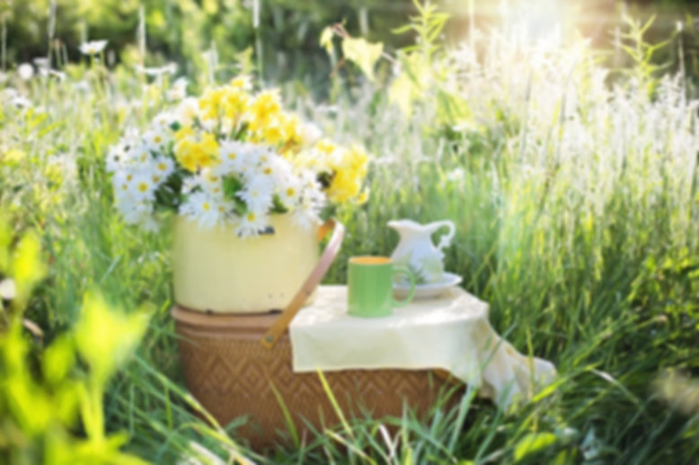 Picnic daisies-Outdoor nature Wellbeing