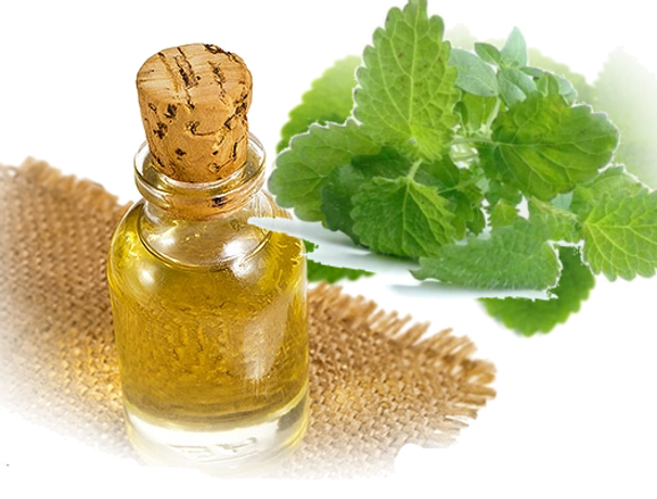 Melissa Essential Oil Lemon Balm 3