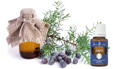 Juniper Essential Oil Aromatherapy