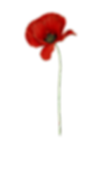 Poppies_720.png
