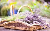 Lavender flowers basket Wallpaper.jpg