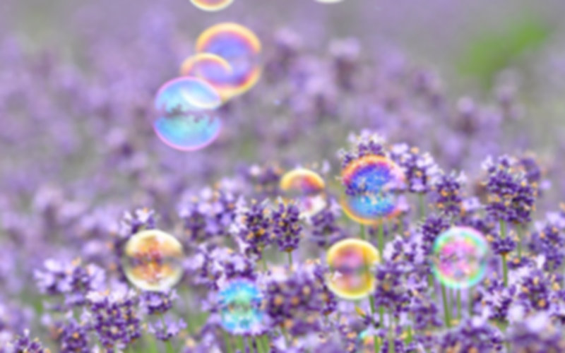 Lavender Flowers Bubbles of Light wallpa