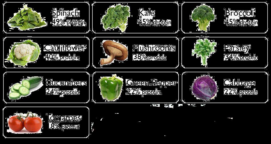 Vegan Protein Sources 2