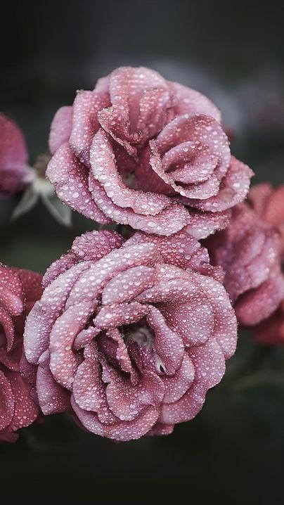 Rose Gold Roses.jpg