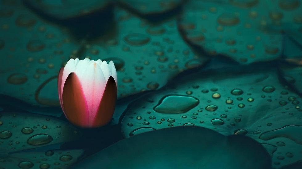 Wallpaper Lotus Flower 8.jpg