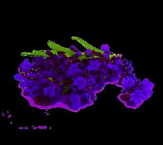 Lavender_trans