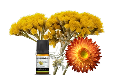 Helichrysum FLower Essential Oil