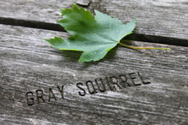 Gray Squirrel LOGO.jpg