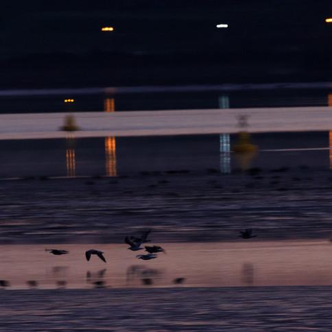 Low Light on the Estuary