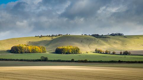Wiltshire Colour