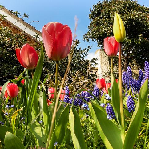 Spring Garden Colour