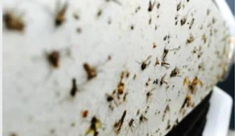 Insekten.PNG
