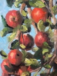 Yankee Apples