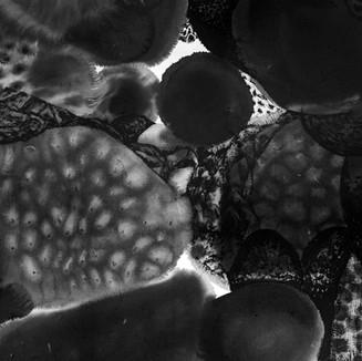 2020827 coral 1 WEB b.jpg