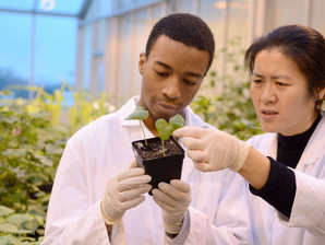 Study Agriculture at Bedfordshire