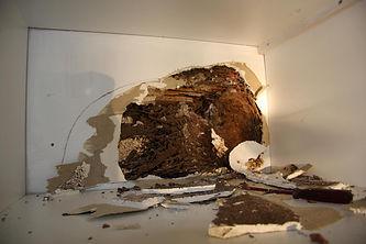 termite_bivouac_after_treatment.jpg